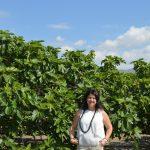 Turismo presenta las I Jornadas Gastronómicas con la Breva de Albatera como protagonista