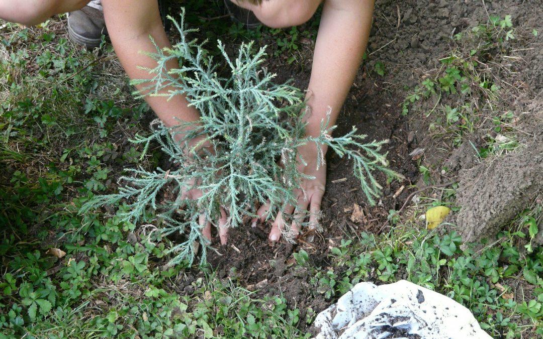 Albatera busca personal de jardinería, albañilería y conserjería