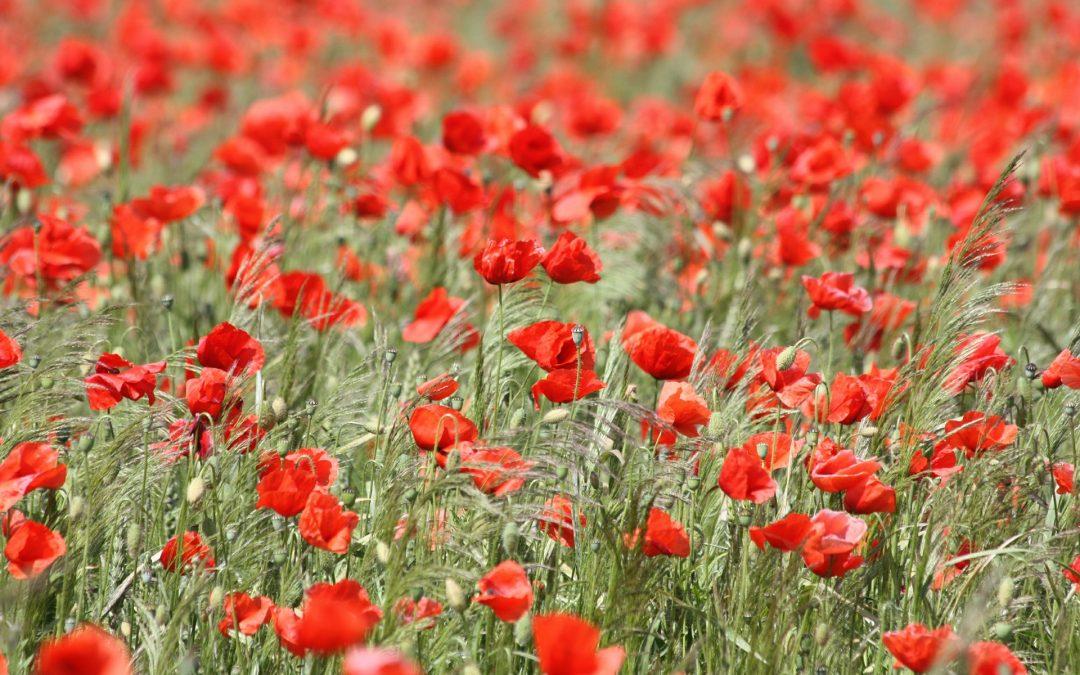 """Se cumplen 100 años del final de la I Guerra Mundial. En Reino Unido, el """"Día del Armisticio"""" se conmemora el día 11, a las 11 horas del mes 11"""