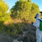 Medio Ambiente concluye el tratamiento contra la procesionaria en la sierra de Albatera